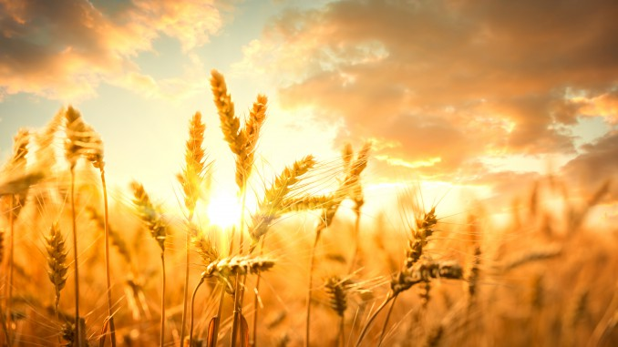 Ukraine economy: Ukraine has exported almost 30 million tonnes of grain
