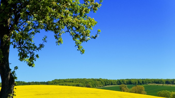 Invest in Ukraine, Ukraine agriculture: moratorium on sale of agricultural land prolonged