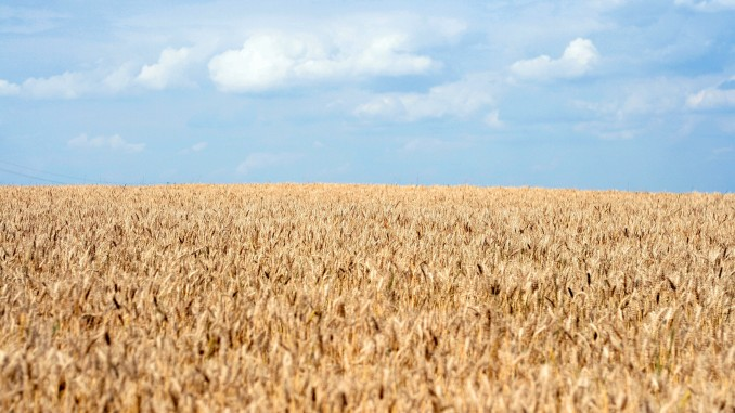 Ukraine economy, doing business in Ukraine: largest grain harvest expected in 2016