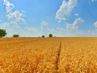 Ukraine agriculture: Ukraine has already exported 18.8 million tons of crops since July