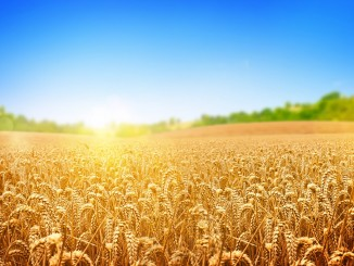 Ukraine economy: Export of agricultural goods amounted to USD 5.7 billion